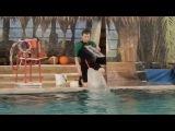 Белый кит) Казань (дельфинарий) 02.01.2014